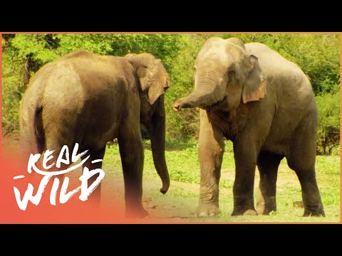 Austin Stevens Adventures - Elephant Charge [Documentary Series] | Real Wild