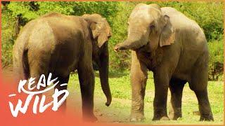 The Search For An Elephant  (Wildlife  Documentary) | Austin Stevens Adventure | Real Wild