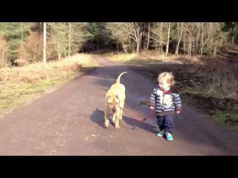 0 Cão espera pacientemente enquanto garotinho brinca em uma poça de àgua