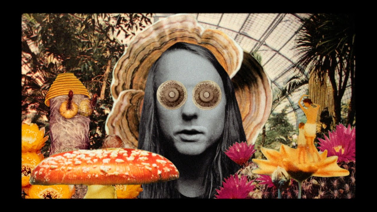video: Andy Shauf -