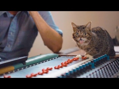 In the Studio with Lil BUB!