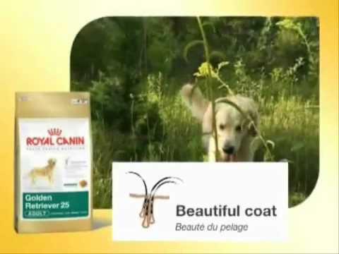 royal canin breed golden retriever hundefutter youtube. Black Bedroom Furniture Sets. Home Design Ideas