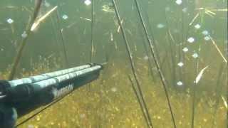 подводная охота 2012