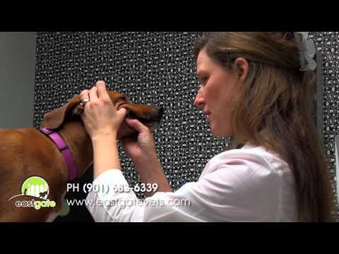 Veterinarians in Memphis TN | Eastgate Animal Clinic