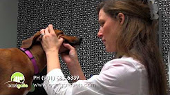 Veterinarians in Memphis TN | Eastgate Animal Clinic