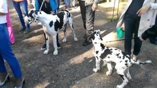 Адыгея выставка собак в  01.10.2016 года в Майкопе