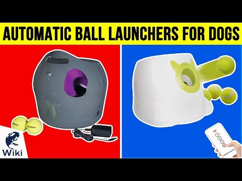 7 Best Automatic Ball Launchers For Dogs 2019