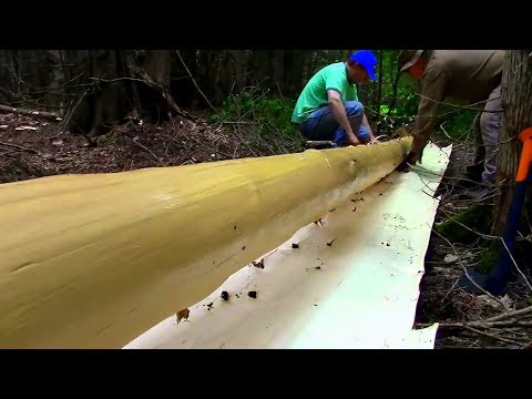 Log Cabin on a Budget- Ep3- Log Peeled in a Single Sheet!