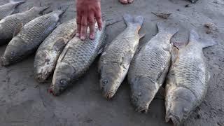 Рыбалка на реке Или низовье Ловим Сазана Нашли СУПЕР МЕСТО