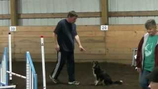 Shayla Dog Agility Steeplechase Round 1 At Red Rovers Usdaa Trial On Sept 28 2013