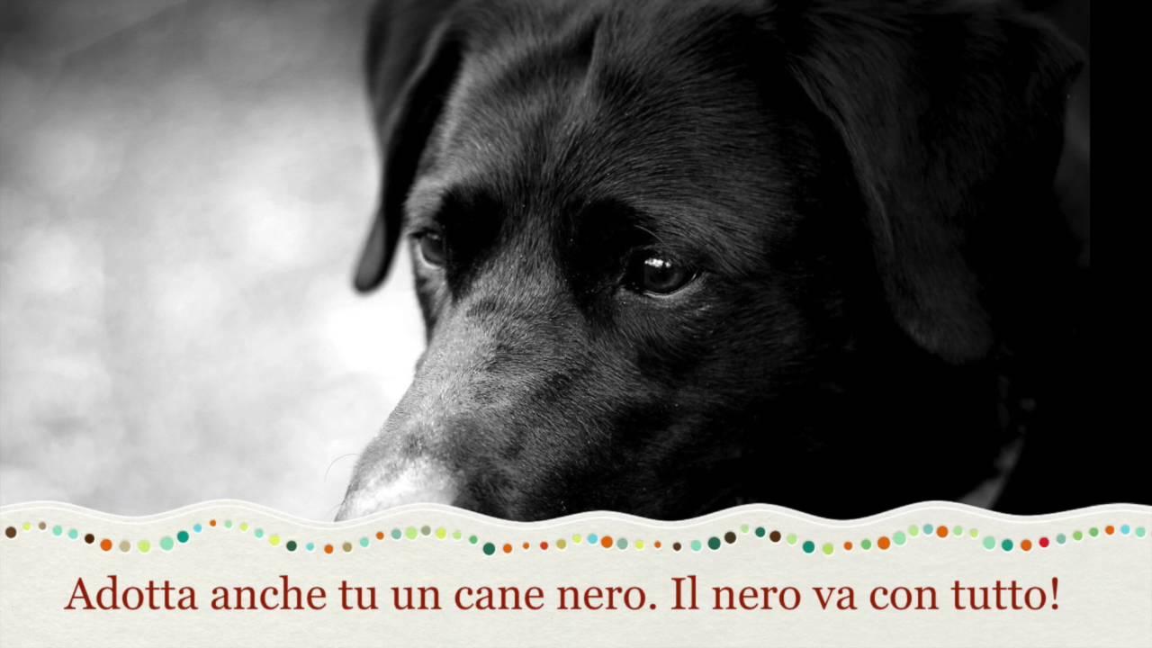 Adotta Un Cane Nero Youtube