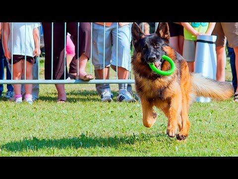 Dog Training Tricks #98