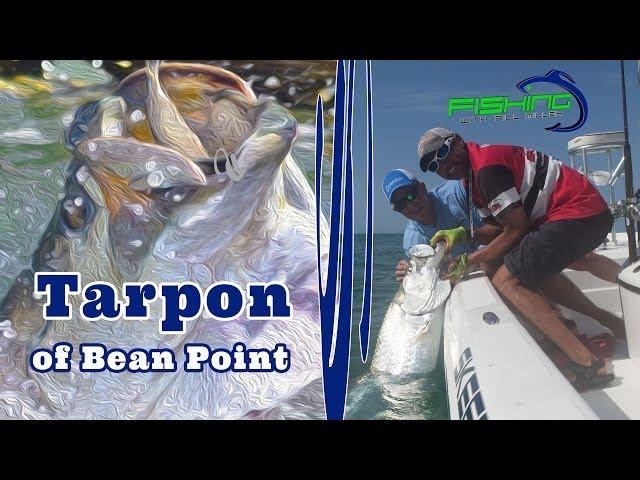 Tarpon of Bean Point - Fishing with Bill Miller