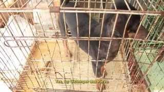 BAWA - The Truth About Pet Shops In Bali