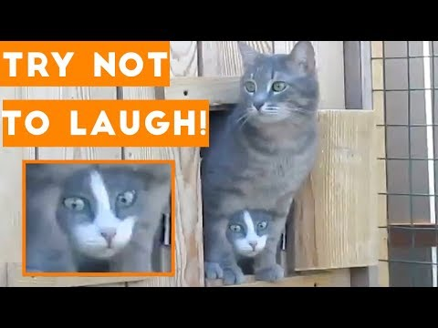 Try Not To Laugh Funniest Animal Compilation 2018 | Funny Pet Videos