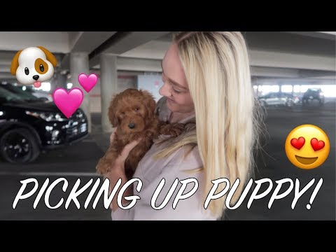 PICKING UP OUR PUPPY || Meeting our puppy for the first time.