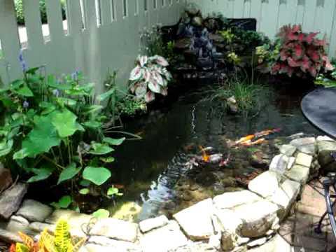My koi pond water garden youtube for My koi pond