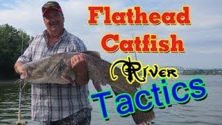 Catching huge flathead catfish using cut bait.