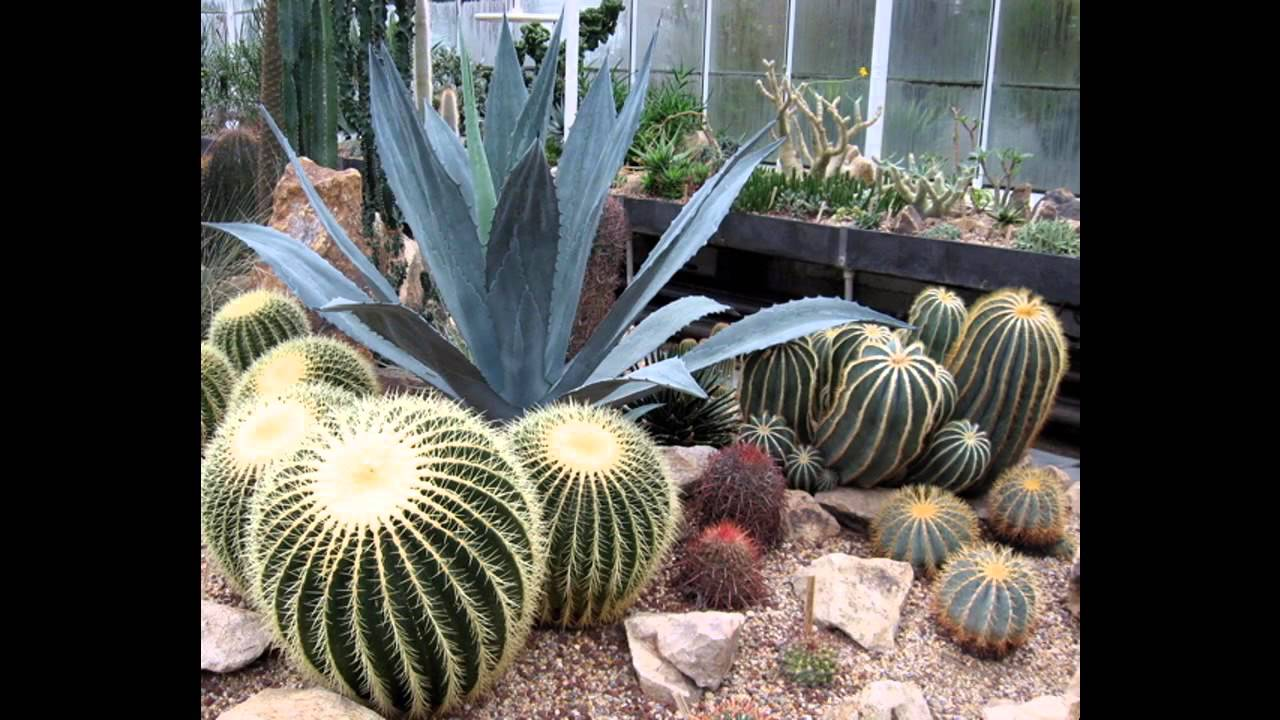 Creative Cactus garden design decorating ideas YouTube