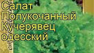 Салат полукочанный Кучерявец одесский. Краткий обзор, описание характеристик Kucheryavets odesskiy
