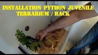 Installation Terrarium-Rack pour serpent juvénile / Python royal / pantherophis ....