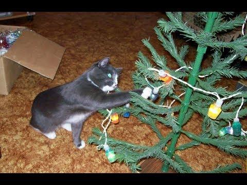 Как украсить елку и нарядить ее? Фото-идеи на 2018 год Собаки