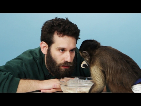 Thumbnail: Stoners Get Surprised With A Monkey & Eat Banana Splits
