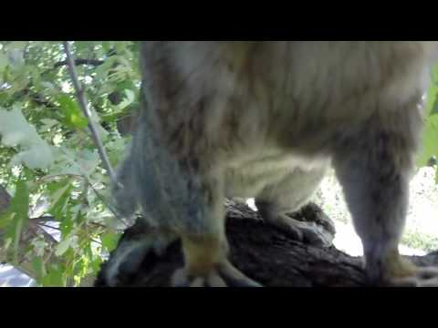 What happens when the squirrel leaves the gopro in the tree