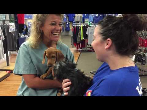 Puppies. Behind The Scenes - Escape in West Ridge Mall - Making of the commercial.
