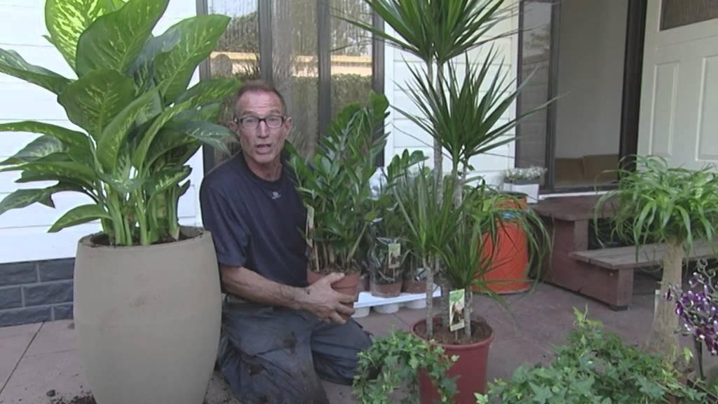 De planten van Green is van Vire in Robs grote
