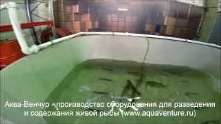 Разведение рыбы (оборудование)(Оборудование для разведения и содержания живой товарной рыбы в работе., 2014-01-28T05:58:50.000Z)