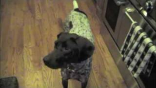 Hazel Dog Tricks - Fetch Beer & Play Dead