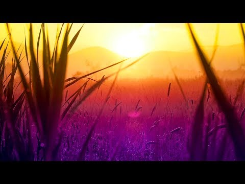 Relaxing Music for Studying, Focus, Spa and Stress Relief Music [Season 2 Best Of]