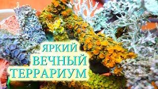Вечный террариум в банке ЛИШАЙНИКИ