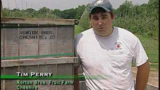Tim Perry -  Norton Bros. Fruit Farm  Cheshire