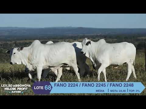 LOTE 68 FANO 2245 X 2224 X 2248
