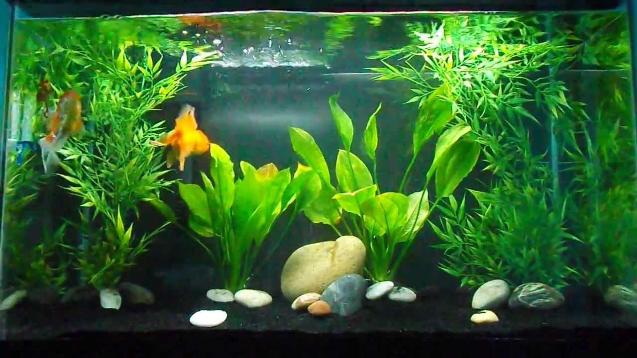 Goldfish Tank Set Up Youtube