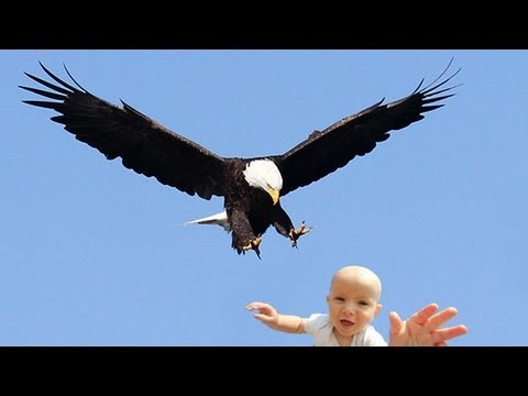 Can An Eagle Pick Up A Kid