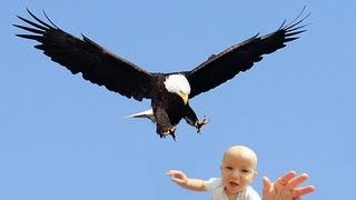 EAGLE SNATCHES KID - Eagle Picks Up Baby