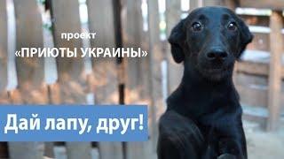 Приюты Украины. Новости проекта