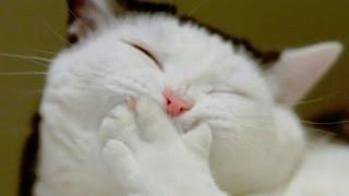 Приколы с животными лето 2014 ● Смех до слез! ● Funny Animals Compilation ● Laughter to tears!