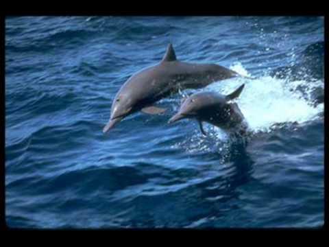 Bài Tập Về Tập Tính Loài: Cá Heo