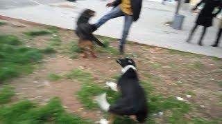Siz Köpeğe Saldırırsanız Köpek de Size Saldırır !