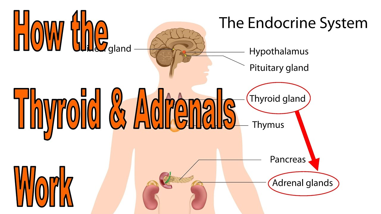 The Link Between Hypothyroidism and Adrenal Fatigue