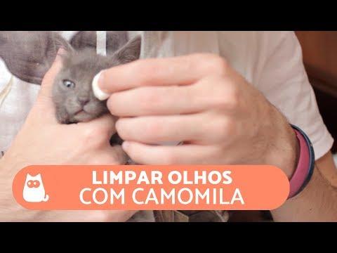 Como limpar os olhos do gato com CAMOMILA