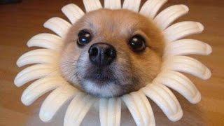 funny animals compilation 2016  śmieszne zwierzęta 2016