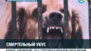В Казахстане бешеная собака насмерть загрызла женщину и покусала ее дочь