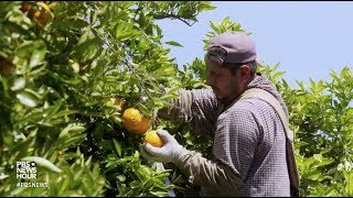 What's on your citrus fruit? Trump's EPA fights to keep controversial insecticide in use