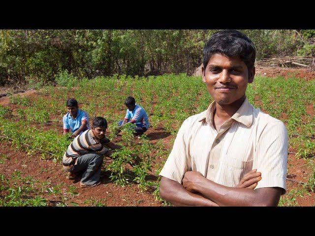 Learning Hi-tech Farming Techniques | Swades is Transforming the Lives of Four Brothers