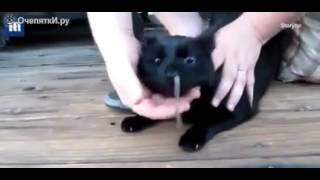 Змею в носу у кота